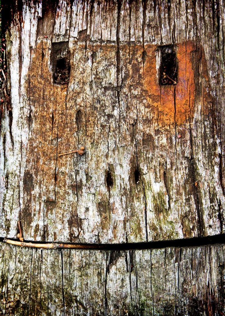 Wooden Stare