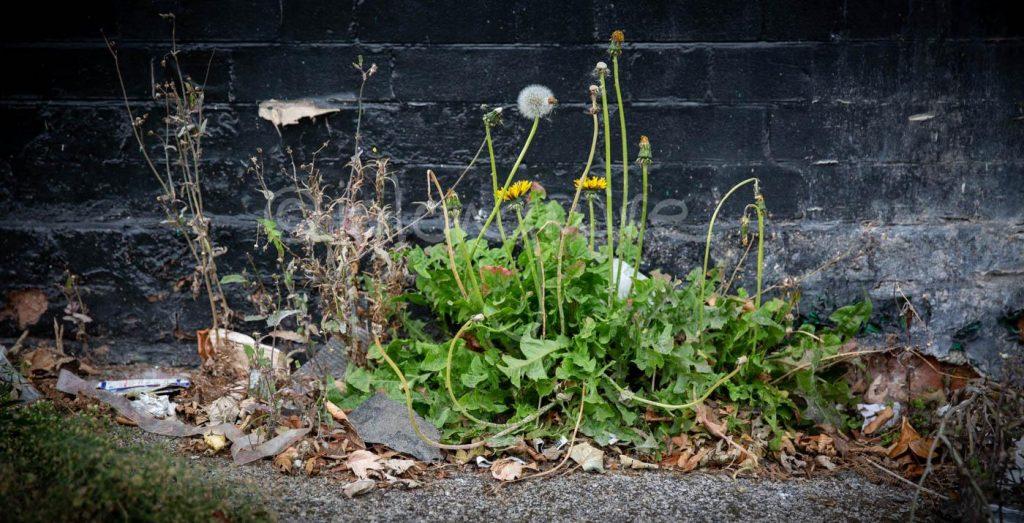 Urban Plantlife
