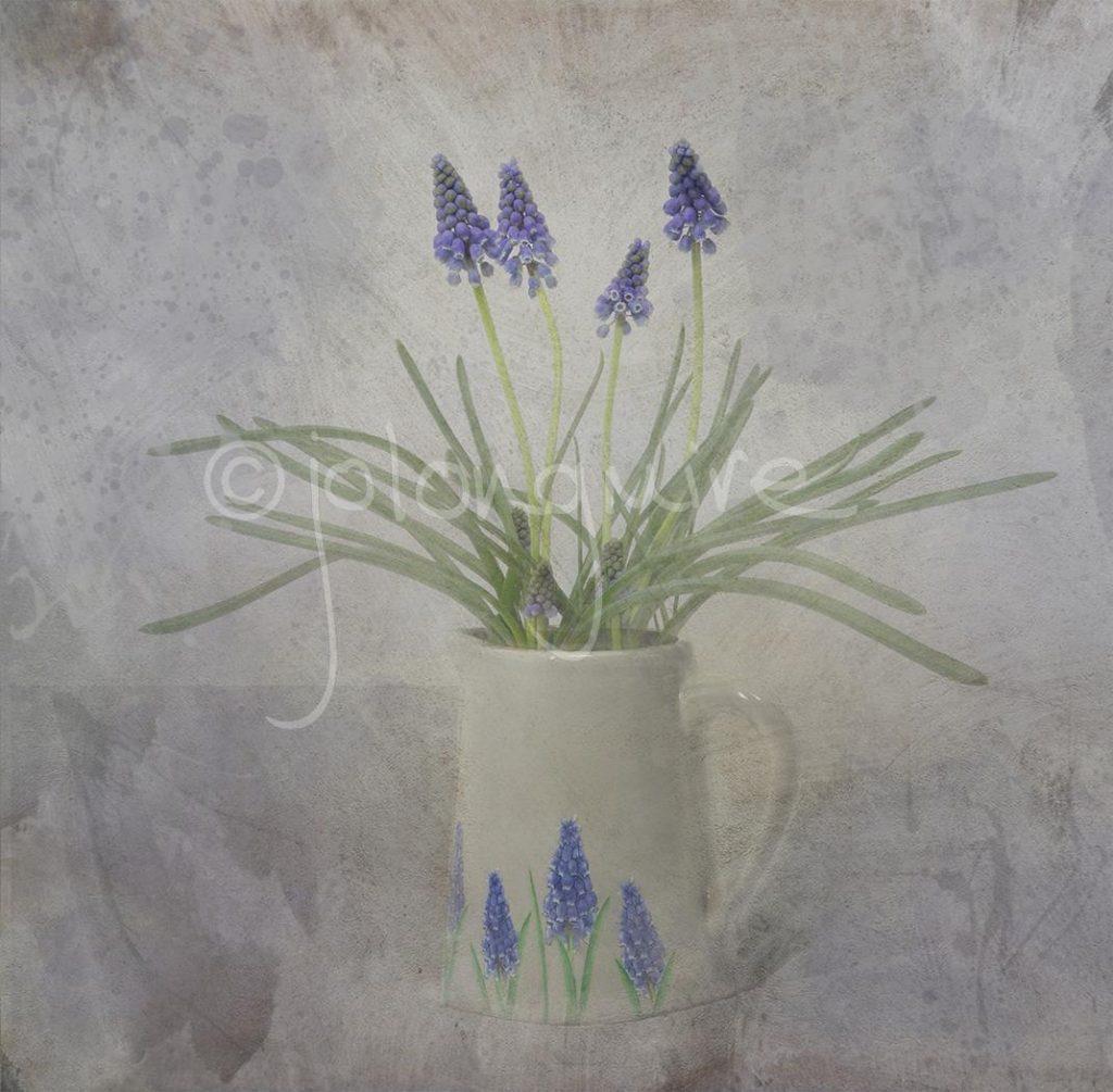 Grape Hyacinths 2